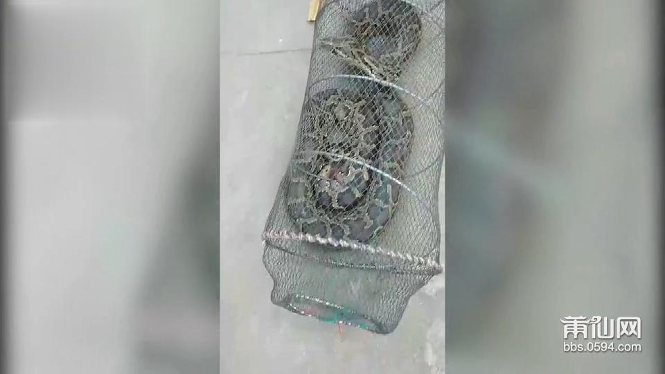 蟒蛇.png